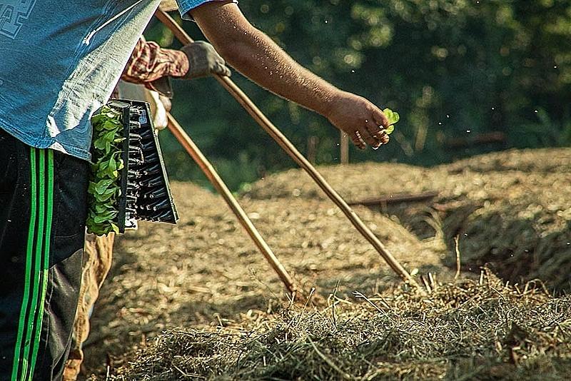 Aprovação do PL Assis Carvalho II garante fomento para produção e auxílio emergencial para agricultores e agricultoras