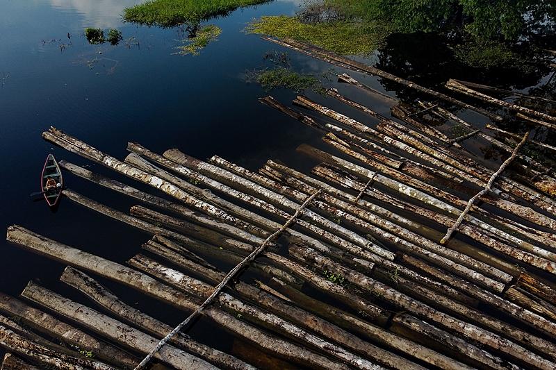 Mais de 460 mil hectares foram devastados para extração de madeira na Amazônia